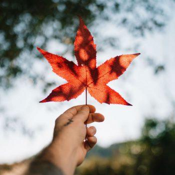 Tìm hiểu về thực trạng du học Canada hiện nay: Đại học hay cao đẳng?